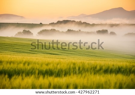 Landscape in themorning with mist and sunrise light. Nice rural summer scenery