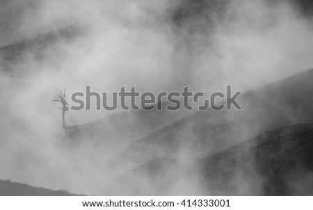 Landscape. Lonely dead tree in the fog - stock photo