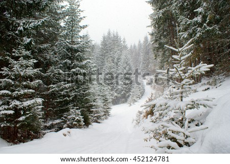 Landscape long snowy empty road in a dense coniferous forest in snowfall. Beautiful snow covered evergreen fir trees along the roadside.
