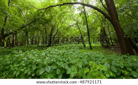 Landscape: Lush green undergrowth and trees in the summer woods