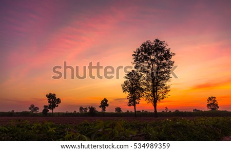 landscape magical sunrise sky with winter silhouette tree nature background.