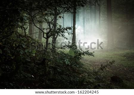 Landscape. Mystery forrest. - stock photo