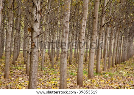 Landscape nature shots in color of an orchard forest during the season of autumn or fall.
