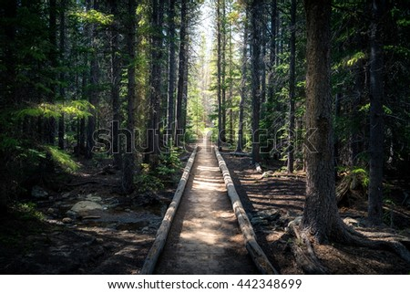 Landscape of a forest trail leading into sunlight. - stock photo