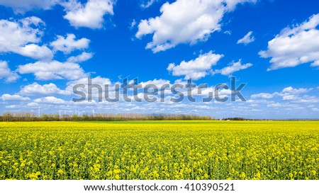 Landscape of a rapeseed or rape field (Brassica napus) in spring - stock photo
