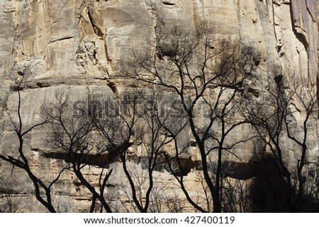 Landscape of a tree against a rugged stone cliff