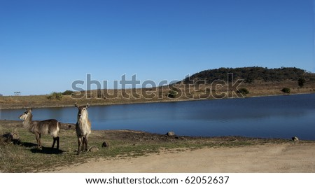 Landscape of a waterhole with some waterbuck feeding on the shore