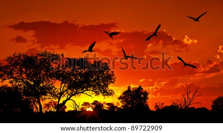 Landscape of Africa with warm sunset, beautiful nature, dramatic red sky, silhouettes of big Ibis birds, wildlife safari, Eco travel and tourism - stock photo