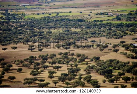 Landscape of agriculture fields of crops, olive oils in Alentejo region, Evora, Portugal - stock photo