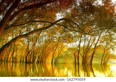 Landscape of autumn trees in river at sunset - stock photo