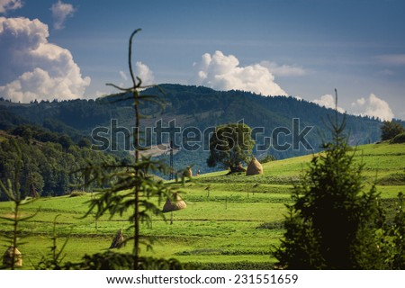Landscape of Carpathian mountains in Ukraine - stock photo