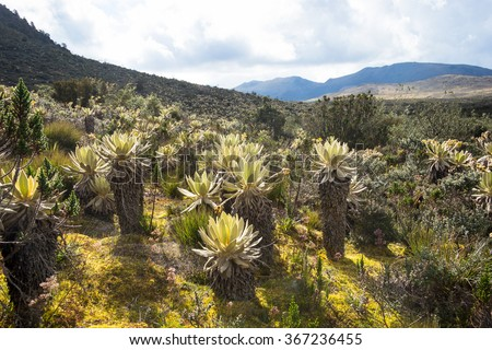 Landscape of Colombian Andean mountains showing paramo type vegetation with frailejon plant on the foreground.. Taken near Cogua, Cundinamarca-Colombia. - stock photo