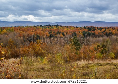 Landscape of colorful trees in autumn forest in mountains