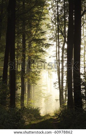 Landscape of deciduous forest on a foggy September morning. - stock photo