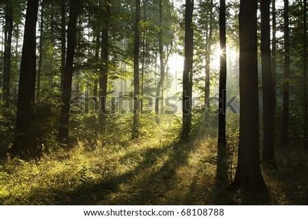 Landscape of deciduous forest on a foggy spring morning. - stock photo