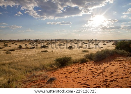 Landscape of desert and grassland, Namibia - stock photo