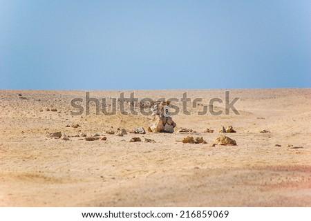 Landscape of Desert and rocks near Hurghada, Egypt. - stock photo