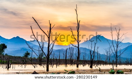 Landscape of dry tree with lake and mountain in sunset - stock photo