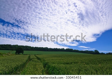 Landscape of farmland in England planted with wheat crop