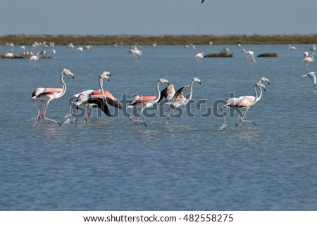 Landscape of flamingos in the salt bonanza