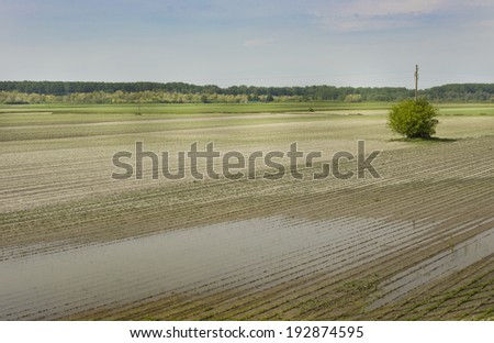 Landscape of flooded corn field in plains - stock photo