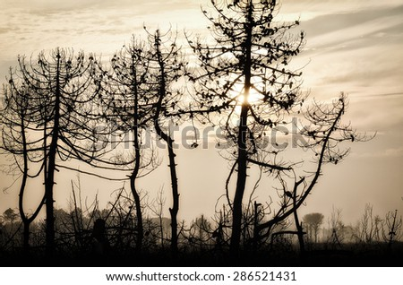 landscape of forest burned by fire in dante's beach, italy