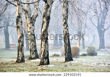 Landscape of forest in fog during Winter Autumn Fall
