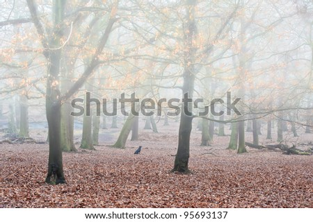 Landscape of forest in fog during Winter Autumn Fall with golden leaves shimmering in mist - stock photo