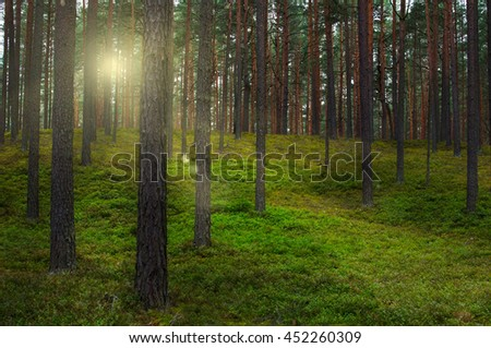 Landscape of forest in the rays of the setting sun.