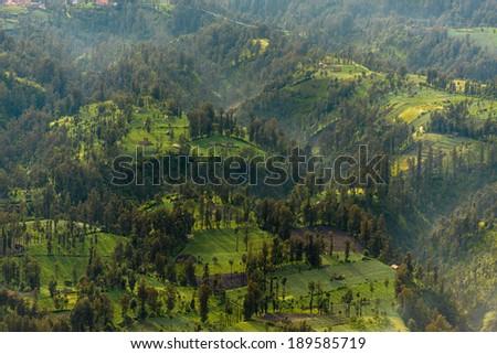 Landscape of Forrest in Bromo Tengger Semeru National Park, Indonesia - stock photo