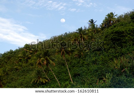 Landscape of full moon raising above coconut palm trees in the jungle of Aitutaki Lagoon Cook Islands