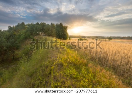 landscape of grain field at sunset - stock photo