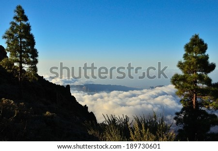 Landscape of Gran canaria with pines on radiant blue sky and sea of clouds, Canary islands
