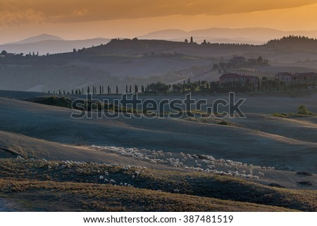 Landscape of hills, Crete Senesi, Sheep in pasture - stock photo