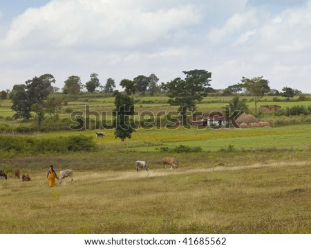 landscape of karnataka with woman tending cattle