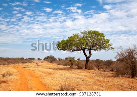 Kenya Landscape Stock Images, Royalty-Free Images & Vectors ...