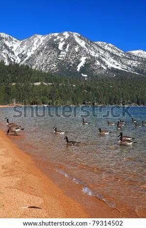 Landscape of Lake Tahoe in California - stock photo