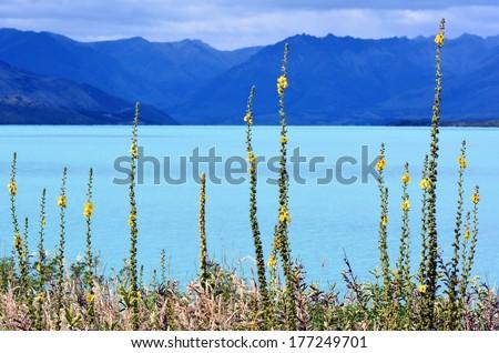 Landscape of lake Wakatipu near Glenorchy in the south Island, New Zealand. - stock photo