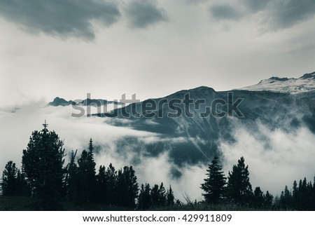Landscape of Mountain with forest and fog going around.  This photo was taken at Mt.Rainier National Park. Washington. - stock photo