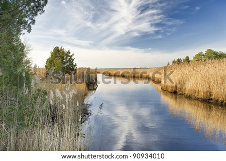 Landscape of New Jersey Pinelands - stock photo