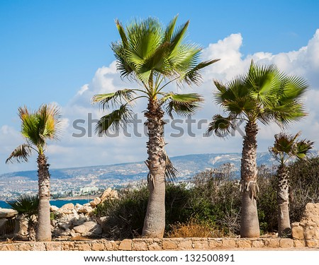 landscape of palm trees against the sky island of Cyprus - stock photo