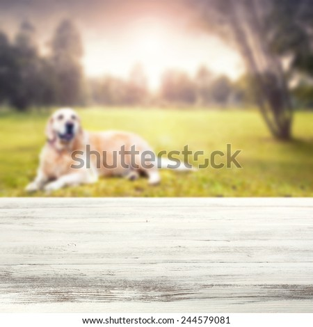 landscape of park and dog with desk of dirty white color and  free space for your dog food  - stock photo