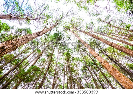 Landscape of Pine Agroforestry at Boa Keaw Silvicultural Research Station, Thailand. - stock photo