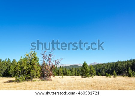 Landscape of pine trees and the Bighorn Mountain Range in Wyoming