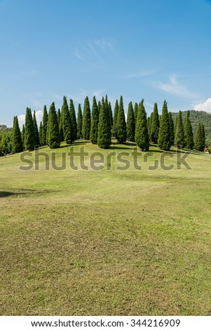 Landscape of pines on hill