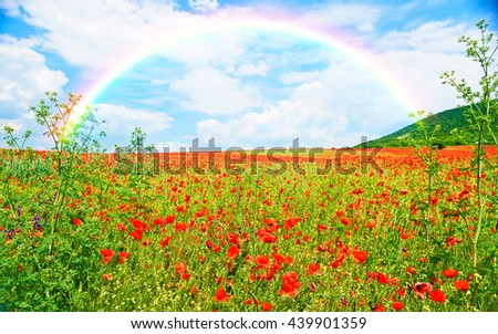 Landscape of poppies field of red flowers, nature landscape and rainbow in Bulgaria - stock photo