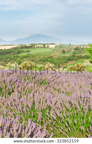 Landscape of Provence with lavender flowers, France - stock photo