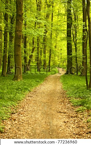 Landscape of quiet wood in spring with little track - stock photo