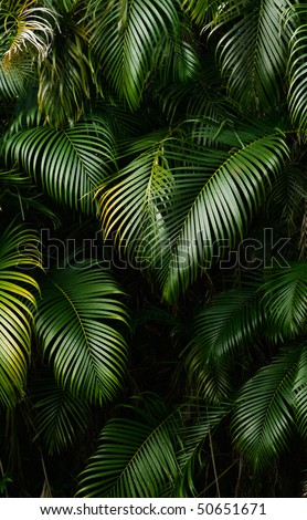 Landscape of rain forest leaf in tropical area. - stock photo