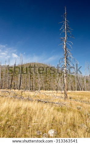 Landscape of re-growth of Yellowstone National Park forest fire. - stock photo